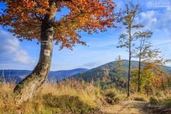 Szlak na Baranią Górę, Beskid Śląski